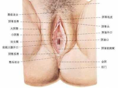 女性生殖器官的功能 女性生殖器官功能及结构